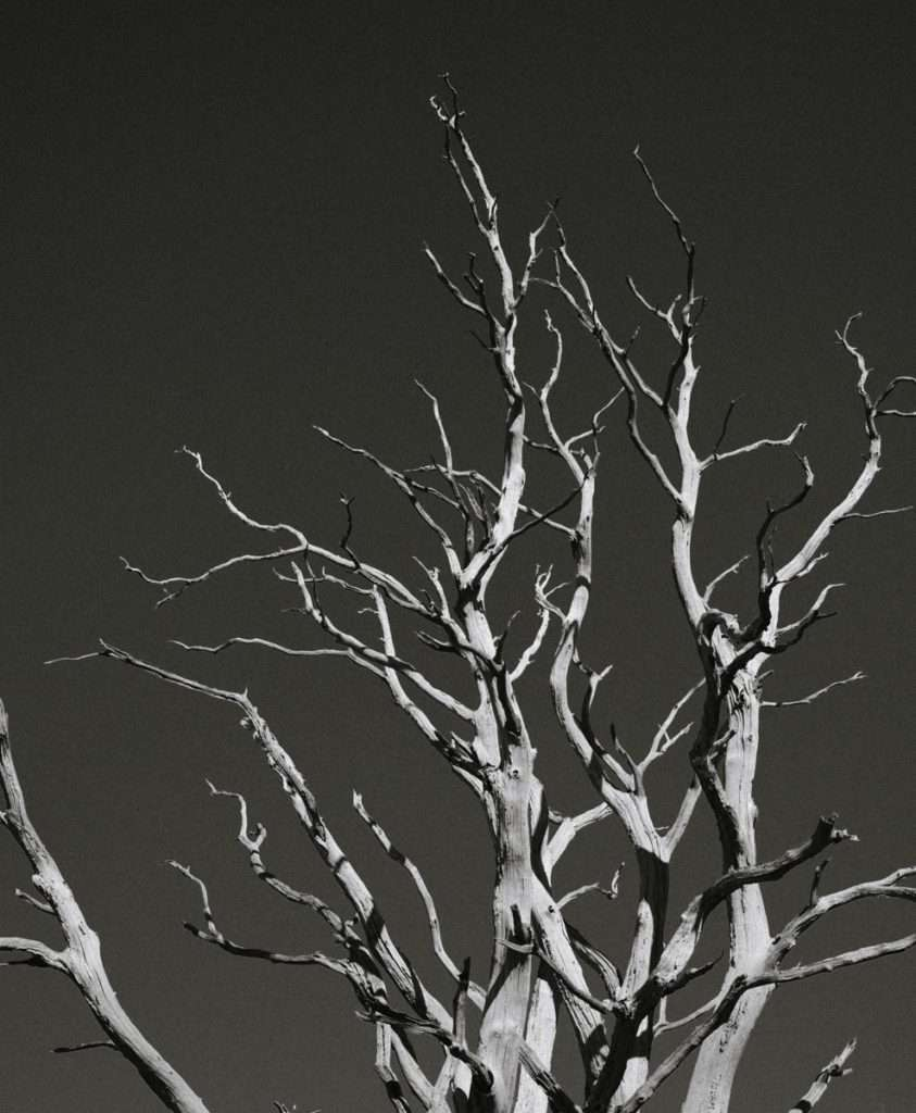 black and white photo of a dead tree in oxfordshire