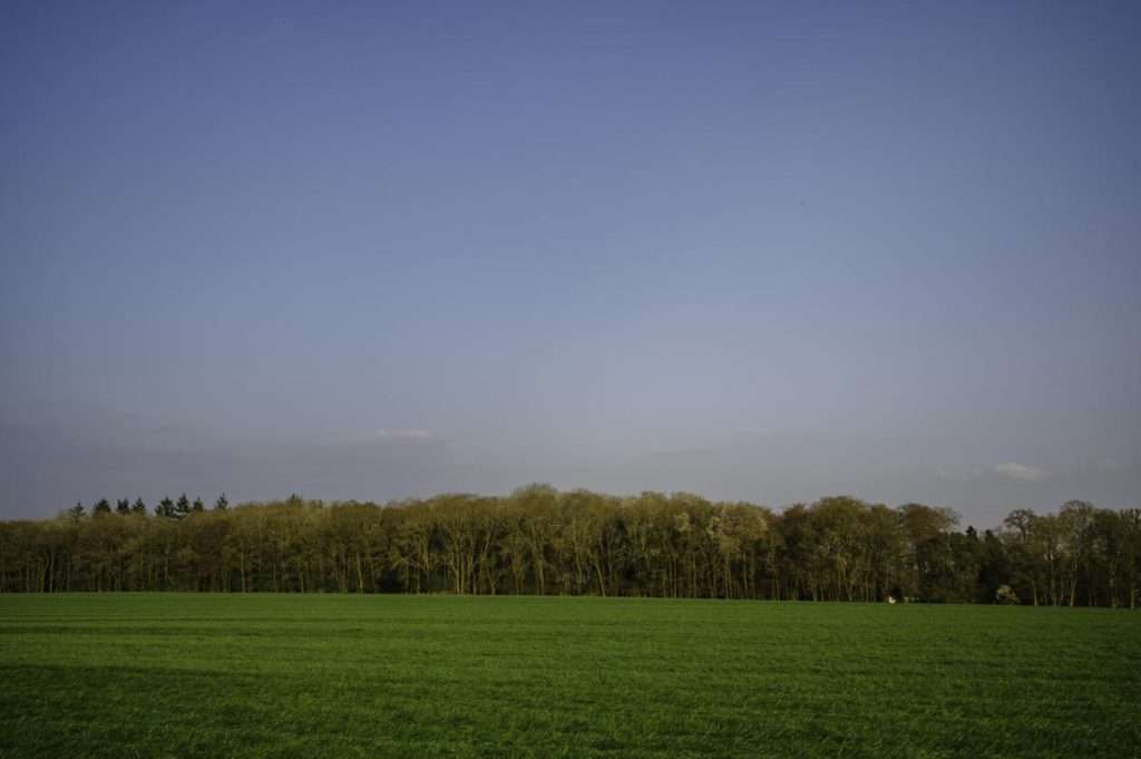 colour photograph of field late afternoon oxfordshire