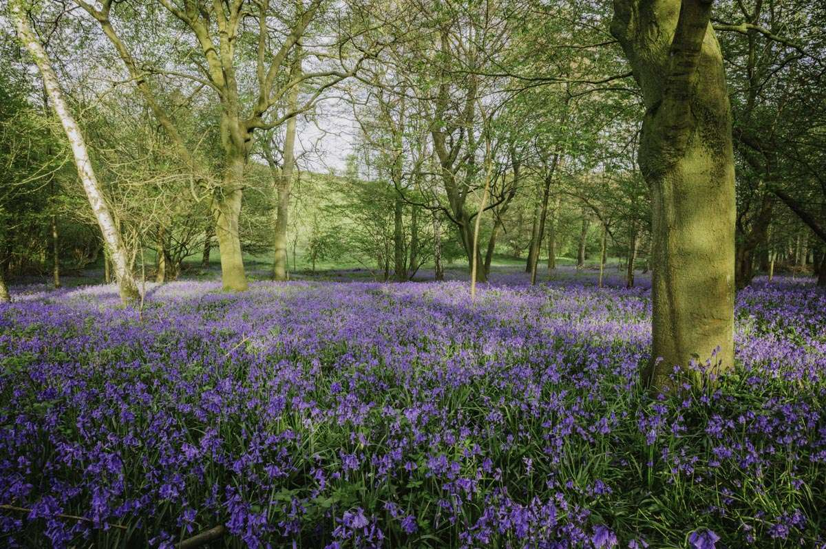 Bluebell photography in South Oxfordshire 2020