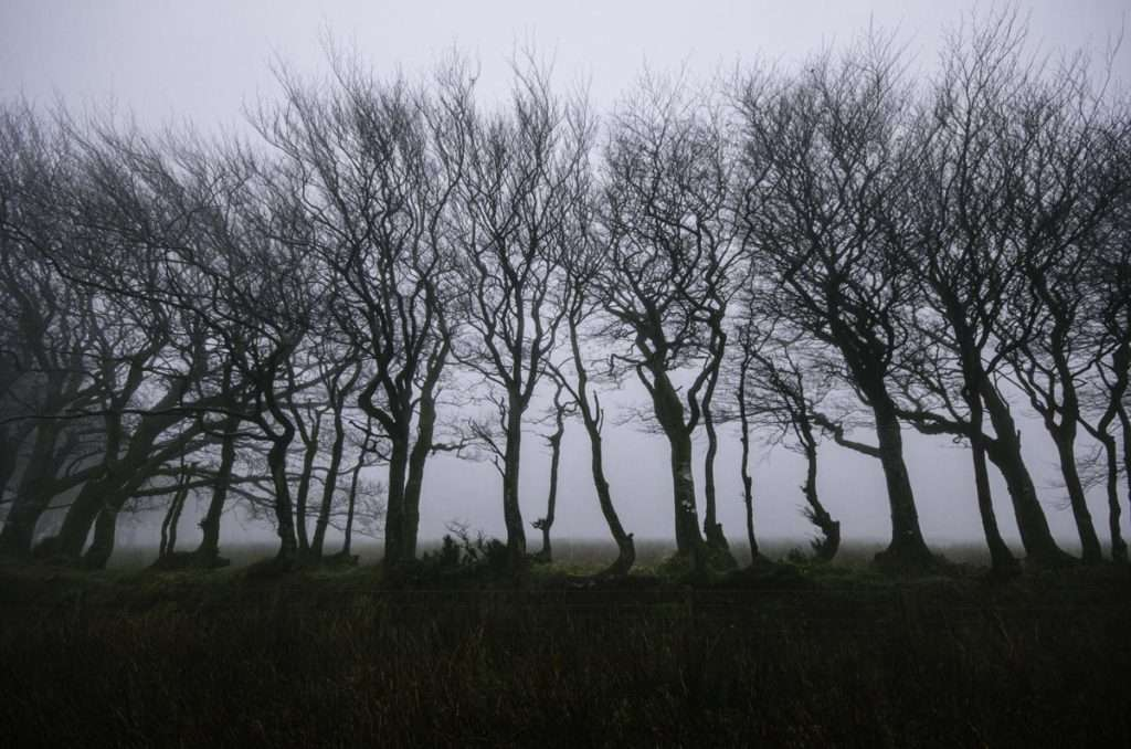 photo of trees in the mist exmoor