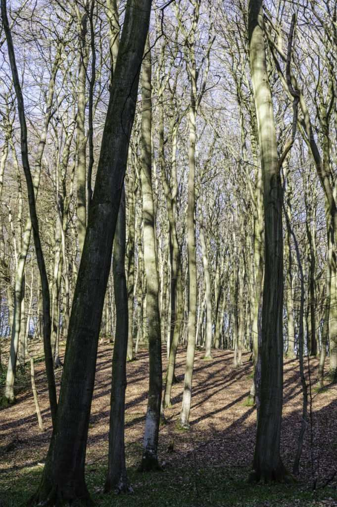 photo of oxfordshire woodland