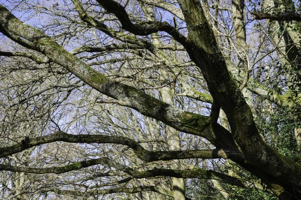Photo of Tree branches