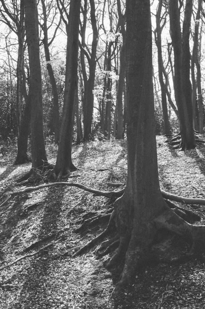 photography trees in black and white