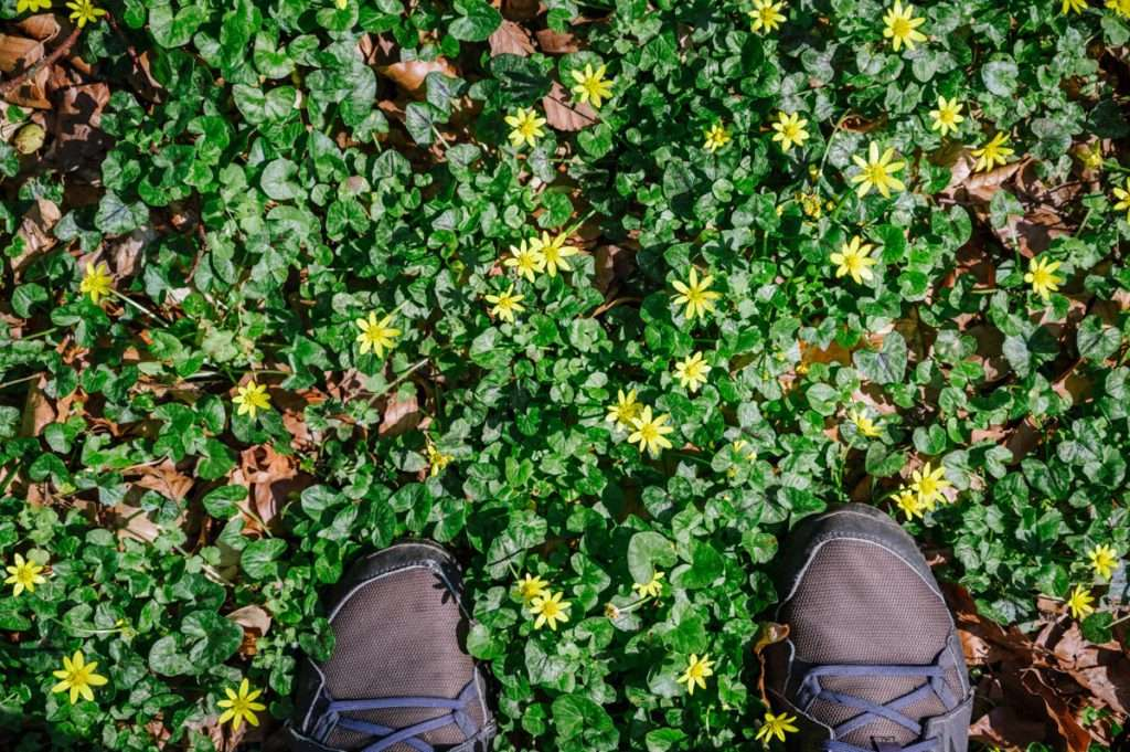 feet on green leaves and yellow flowers