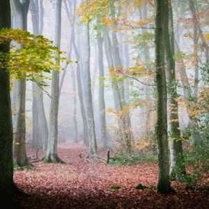 Woodland Autumn Scene photographic Print