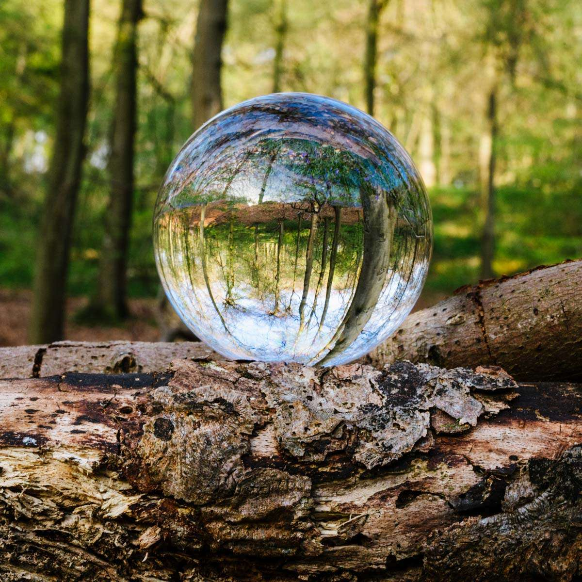 lensball photography in the South Oxfordshire woodland