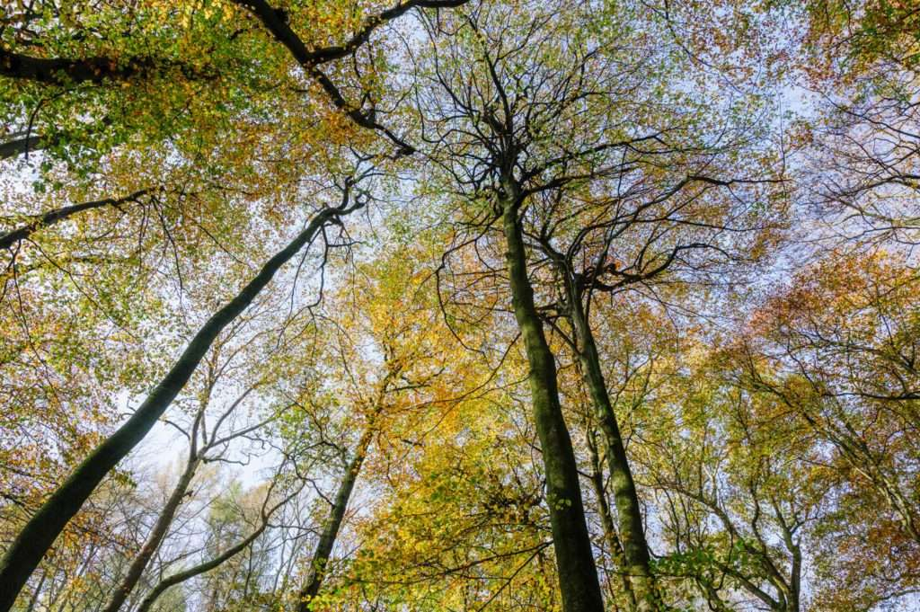 Tree Canopy in Oxfordshire