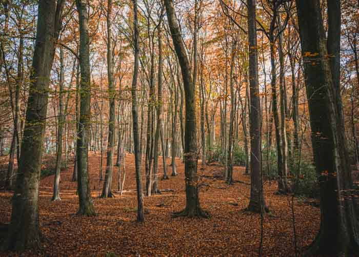 Photographs of Chiltern Hills Woodland