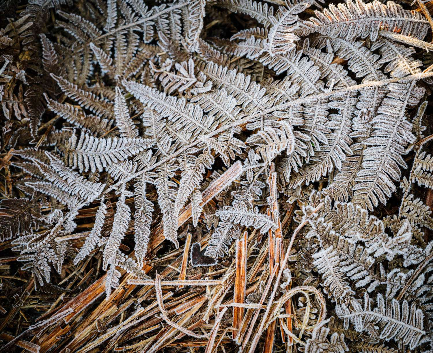 Frozen Fern leaf in Oxford Shire