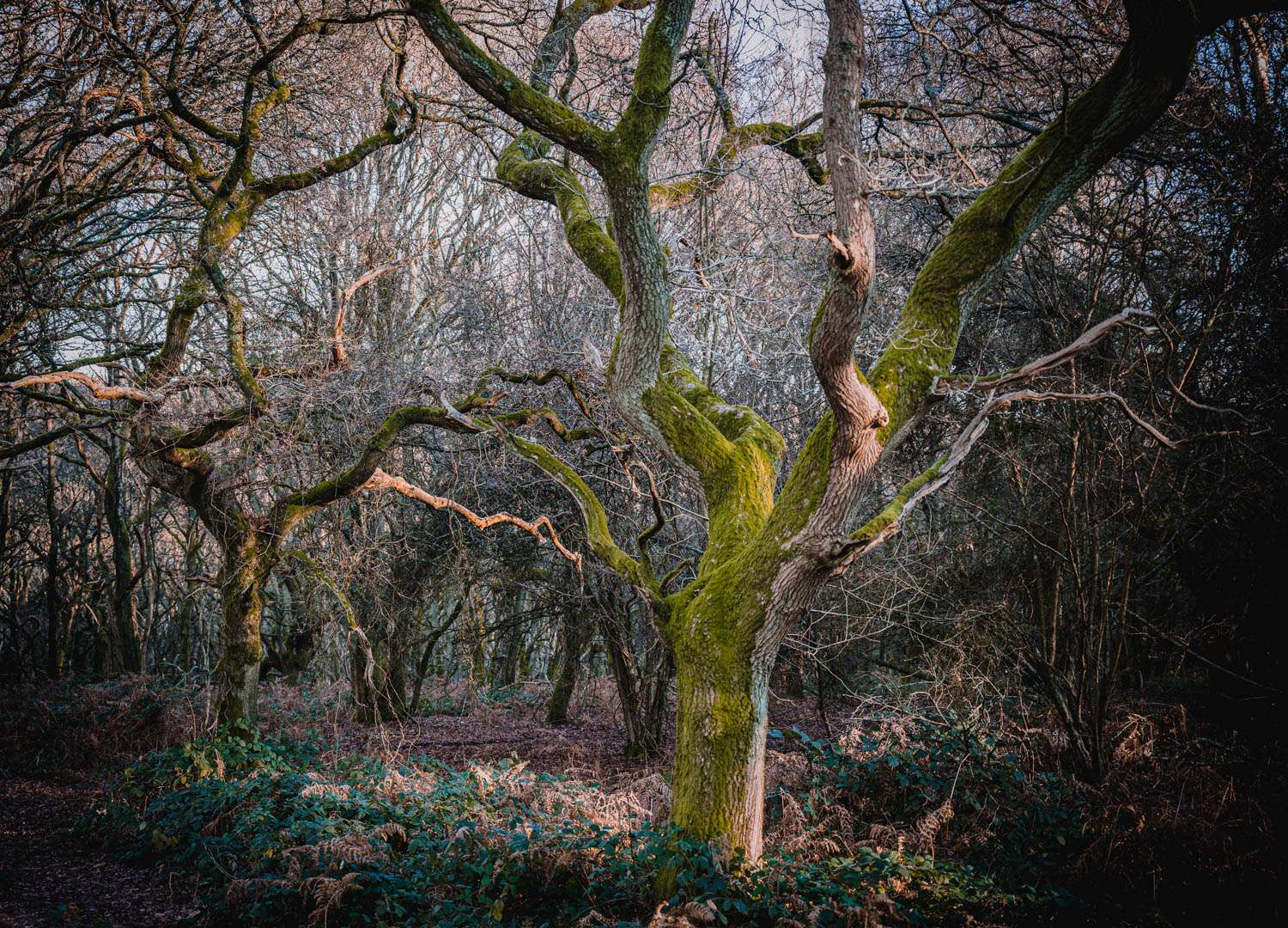 Mystical Woodland in Maidensgrove Common