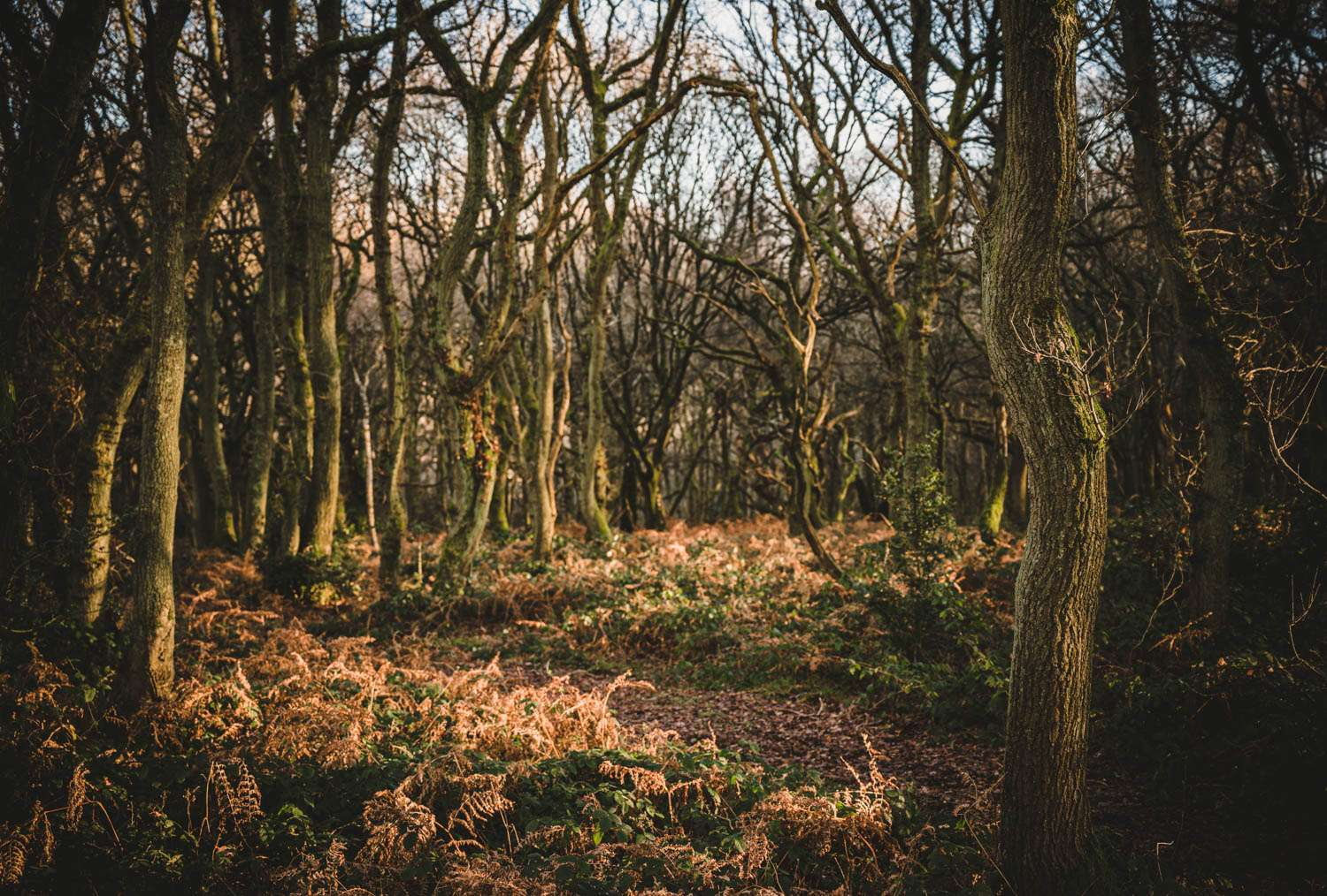 Magical woodland