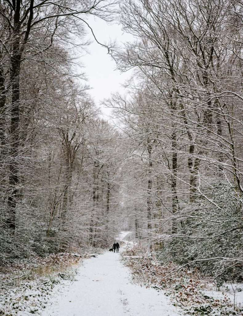 A photograph of dogwalkers on a snowy path