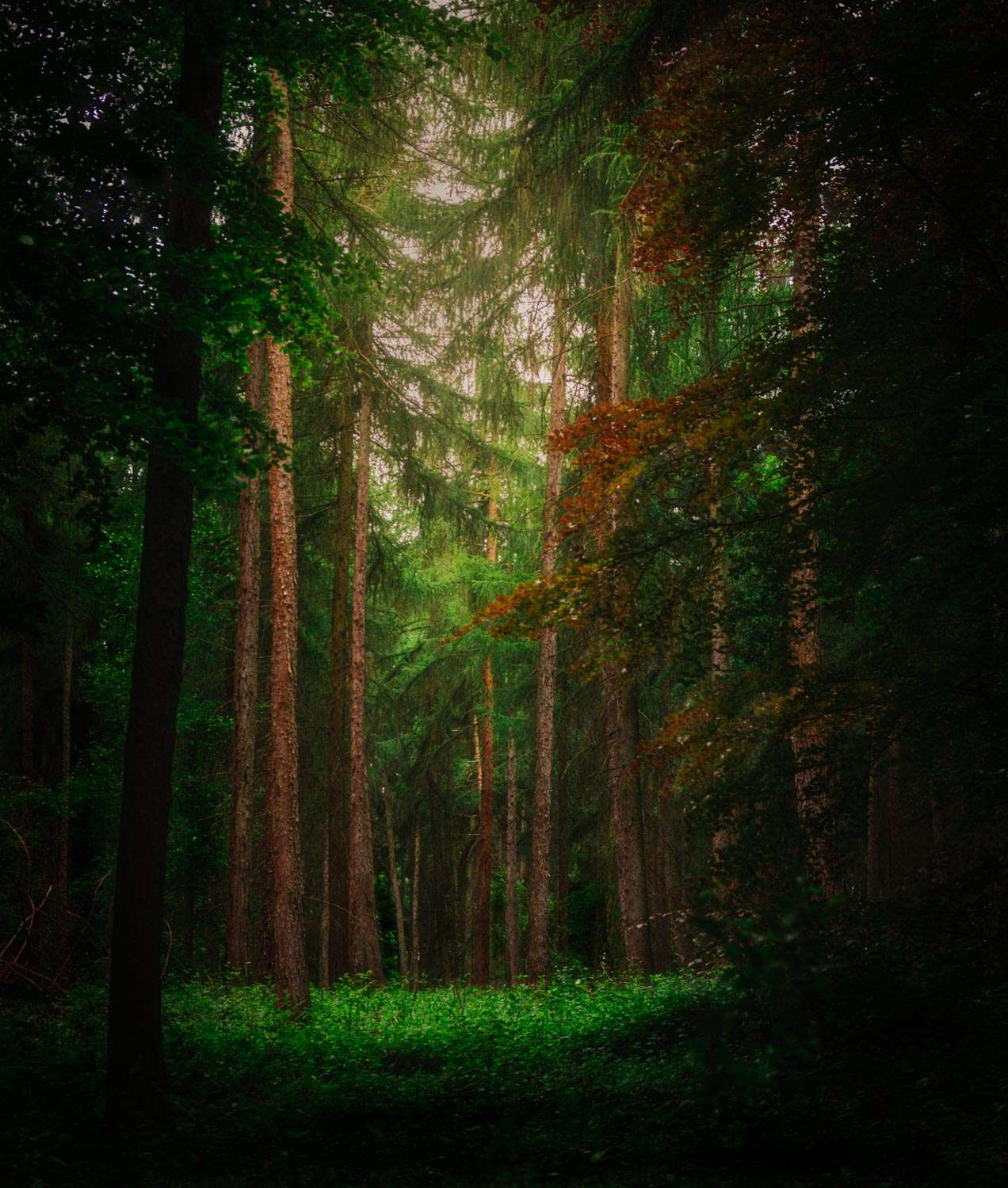 Magical and Mystical photograph of Woodland around Nettlebed Oxfordshire
