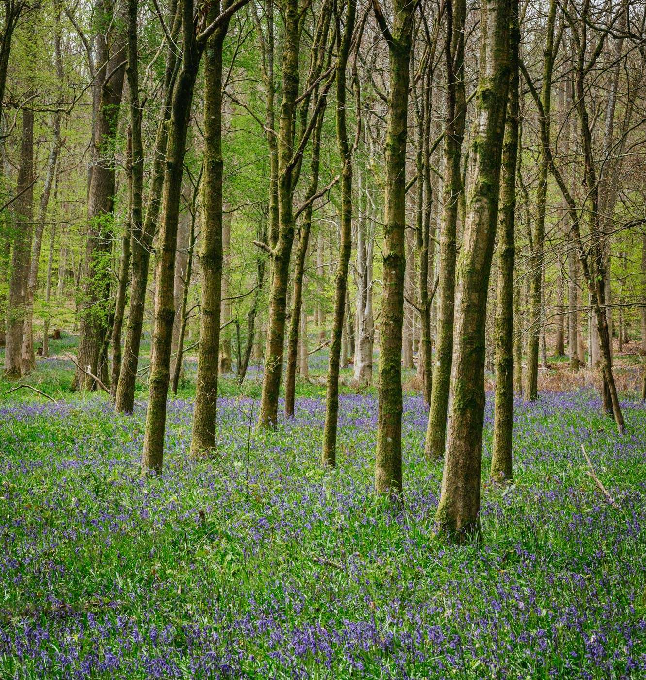 Greatbottom wood South Oxfordshire