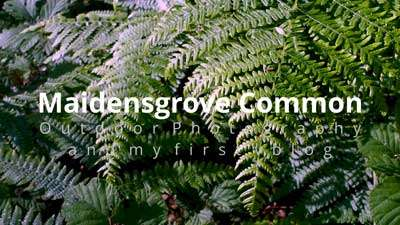Amazing video of Maidensgrove Common Photography